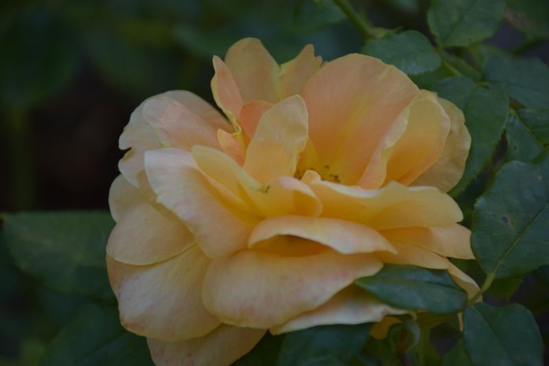 Combourg-20150821-6788